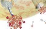 Как правильно расшифровать анализы онкомаркеров яичника