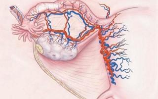 Изменения в репродуктивной системе женщины при дисфункции яичников