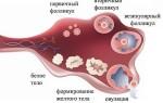 О чём свидетельствует появление белого тела в яичнике