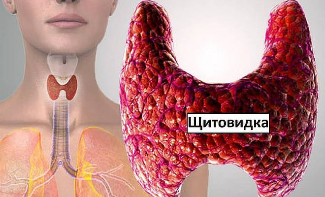 Щитовидная железа на фото