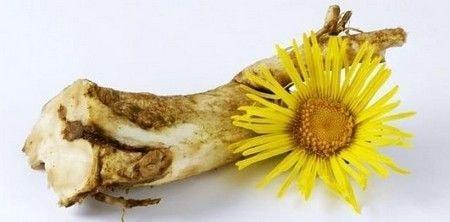 Цветки и корень девясила