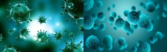 Учловно-патогенные бактерии и инфекции передающиеся половым путём