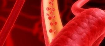 Кровеносные сосуды увеличены