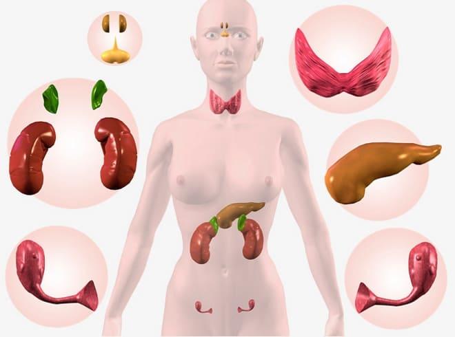 Последствия нарушений эндокринной системы