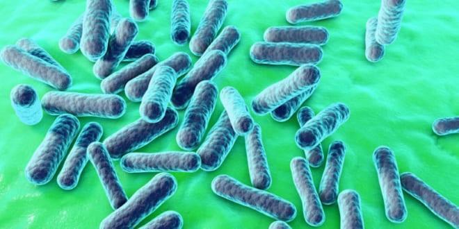паразитирующие простейшие бактерии